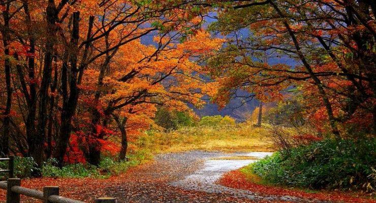 Gli aforismi più celebri dedicati all'autunno