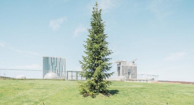 """""""Verde Contemporaneo"""", le foto di Daniele Cametti Aspri in mostra a Roma"""