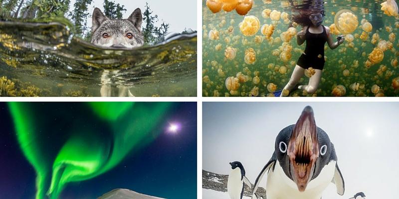 Le 20 foto più belle del 2015