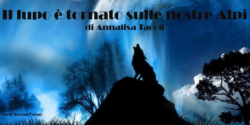 Il lupo è tornato sulle nostre Alpi - racconto di Annalisa Tacoli