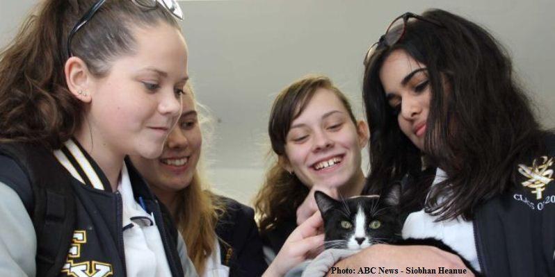 In Australia gatti a scuola per affrontare meglio gli Esami di Maturità
