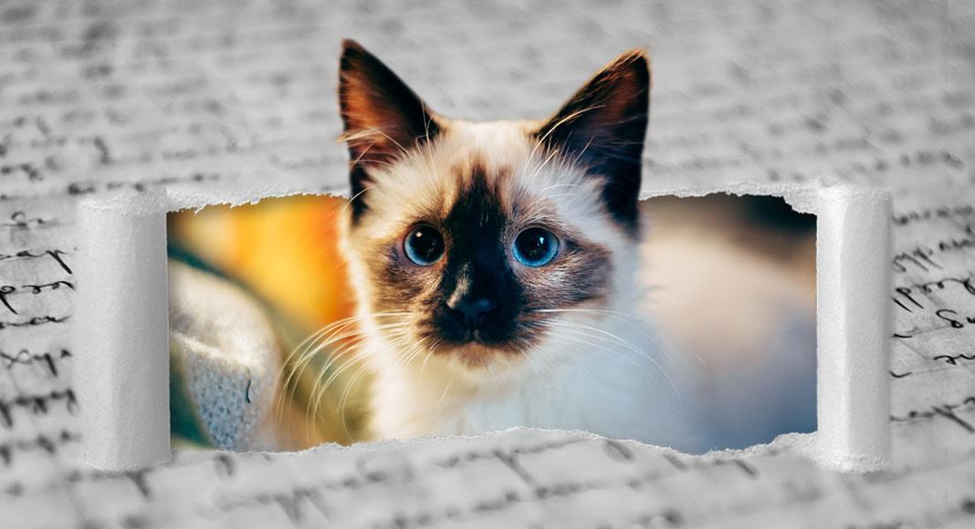Festa Internazionale del Gatto, le 10 poesie più belle dedicate ai mici