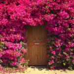 Le porte artistiche più belle al mondo | Unknown Garden Door - Image credits: wallpapersinhq.com