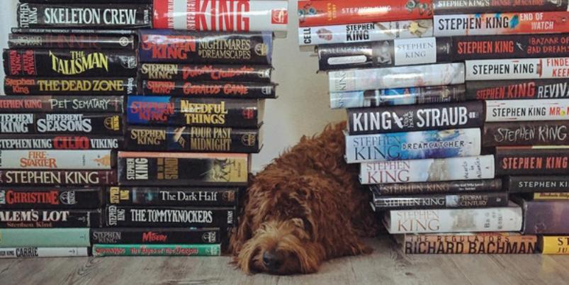 Gli account Instagram che stanno facendo impazzire chi ama i cani e la lettura
