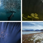 National Geographic Nature Photographer of the Year, ecco i vincitori