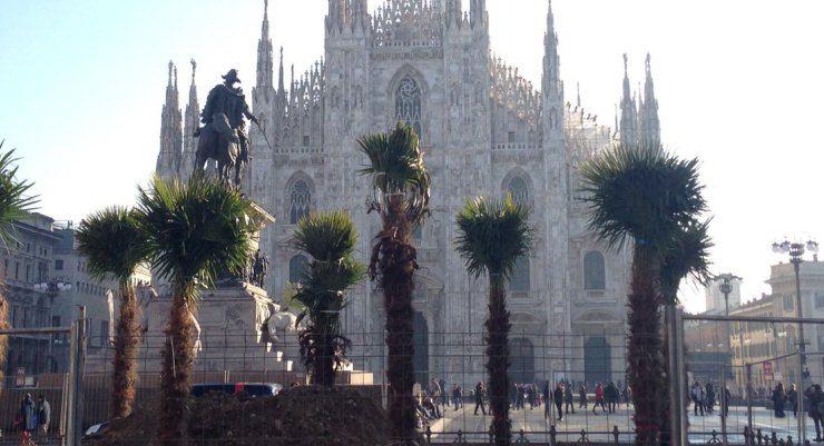 Palme in piazza Duomo, una scelta che non mette d'accordo tutti