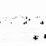 SEA(E)SCAPES - Visioni di Mare | ©-Lorenzo-Cicconi-Massi-Salento-2001