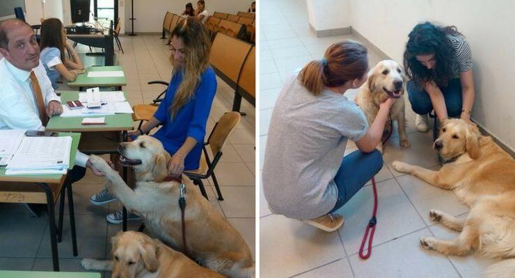 A Teramo la Pet Therapy riduce lo stress da esami in facoltà