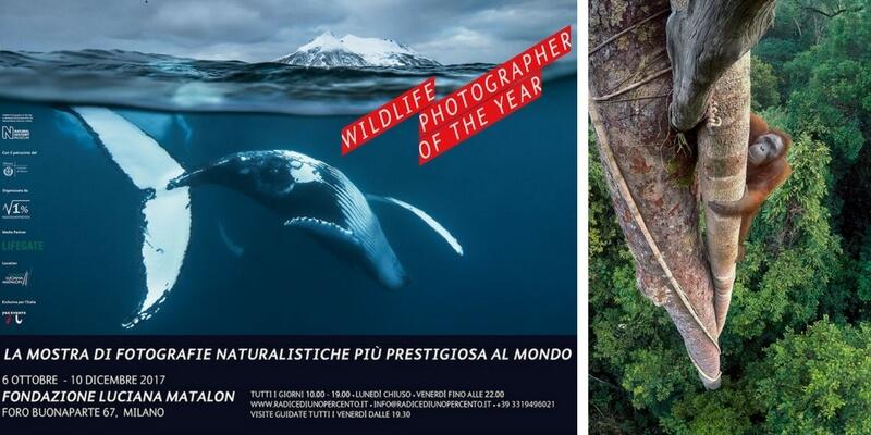 Le bellezze e la diversità della natura in mostra a Milano