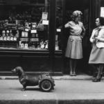 Robert Doisneau. Pescatore d'immagini | Robert Doisneau, Un chien a roulettes 1977 @ Atelier Robert Doisneau