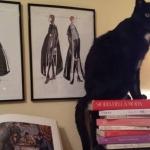 Perché cani e gatti sono i migliori compagni dei lettori (e degli scrittori)?