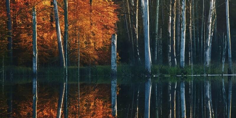 """""""Autunno al lago"""", gli scatti del fotografo daltonico Kilian Schönberger"""