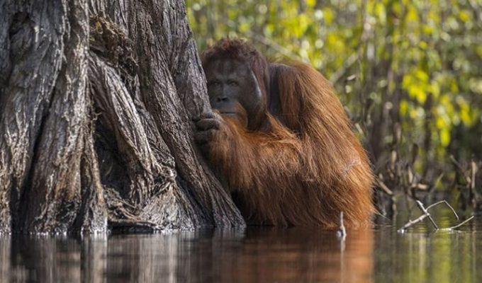 Le migliori foto dell'anno secondo il National Geographic