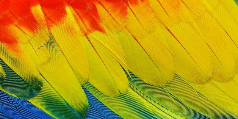 L'omuncolo e i pappagalli - Racconto di Matteo Girardi
