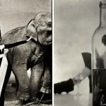 New York, all'asta le significative fotografie degli ultimi due secoli