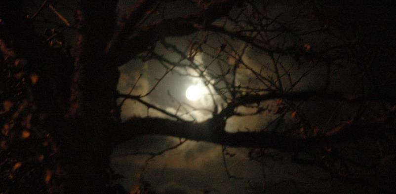Confessioni di un Fantasma - Racconto di Vittoria Liotti