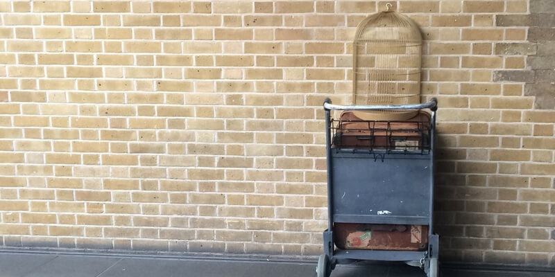 le 15 caratteristiche che accomunano i fan di Harry Potter