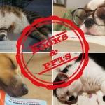 Le foto di Books & Pets del 27 giugno