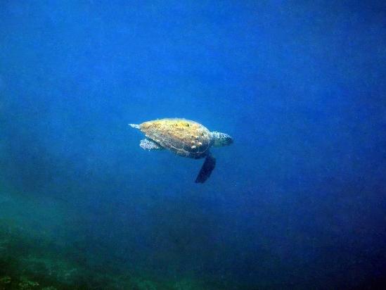Tartaruga di Atanasio Mastropierro (menzione speciale)