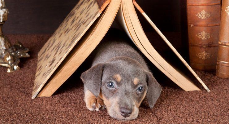 5 libri con un animale per protagonista