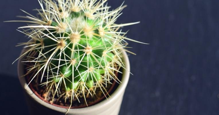 Il mio piccolo cactus - Racconto di Dario Zizzo