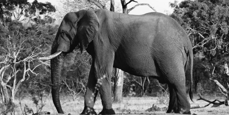 Se vedi grigio, sposta l'elefante - Racconto di Ilaria Pala