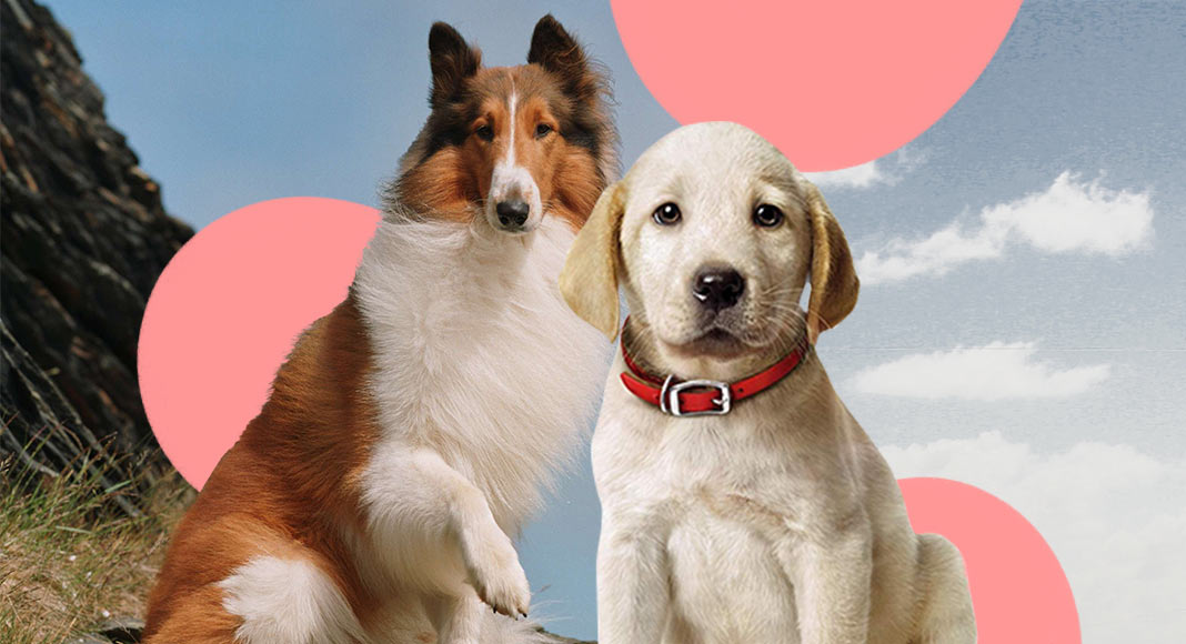 Giornata mondiale del cane, i 9 cani più celebri della letteratura