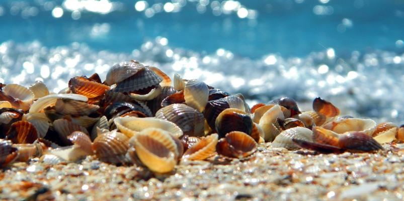 Conchiglie sulla spiaggia – Racconto di Marina Ballerini
