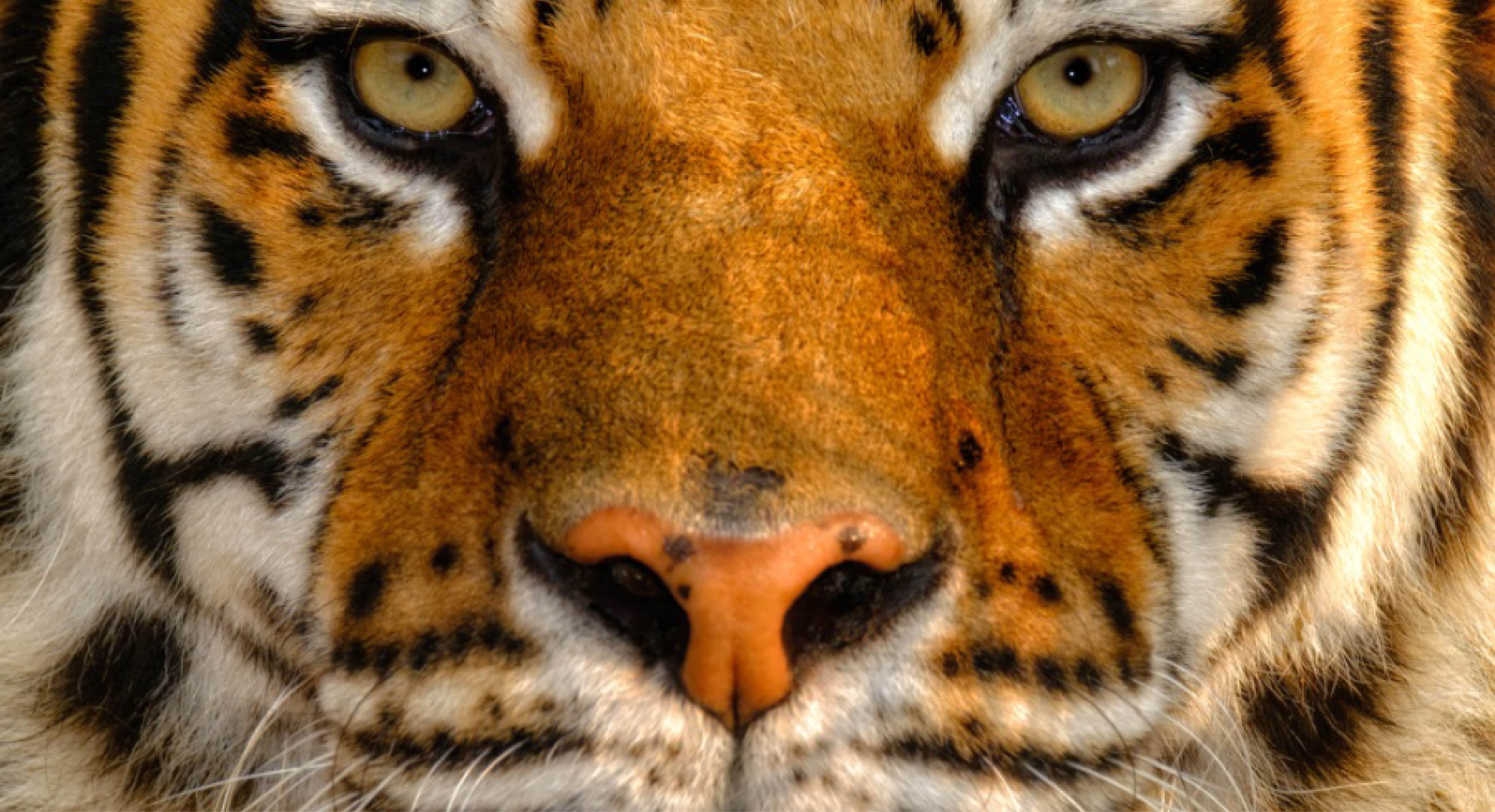Mostra_fotografica_Natura