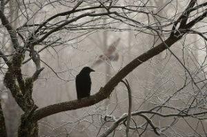 7_assurde_curiosità_su_Edgar_Allan_Poe
