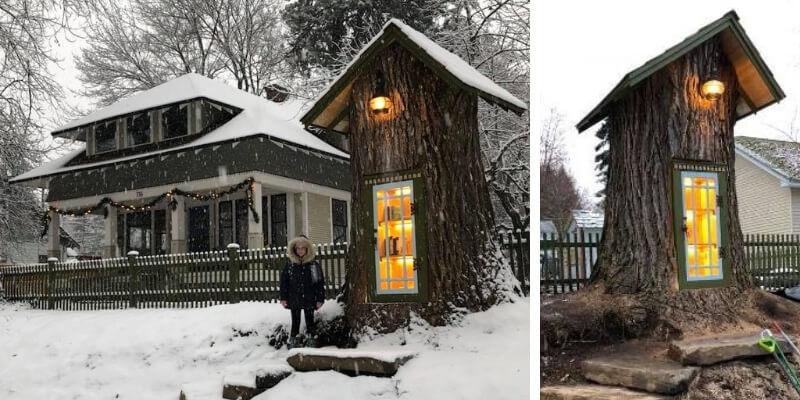 Dal tronco di una quercia malata crea una minuscola biblioteca