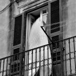 Ortigia - Fotocredits: Tiziana Blanco
