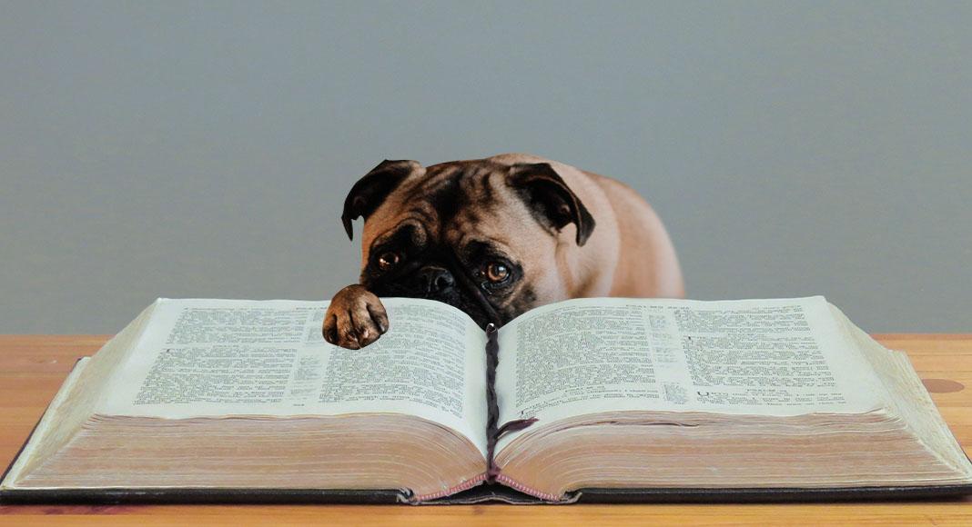 Gli scrittori scendono in campo per aiutare i cani