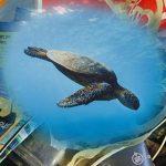 Afrodite, la tartaruga imprigionata dai rifiuti nel Mediterraneo