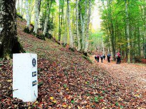 800px Pietra segnaletica del Cammino di San Francesco nella faggeta di Bosco Luta