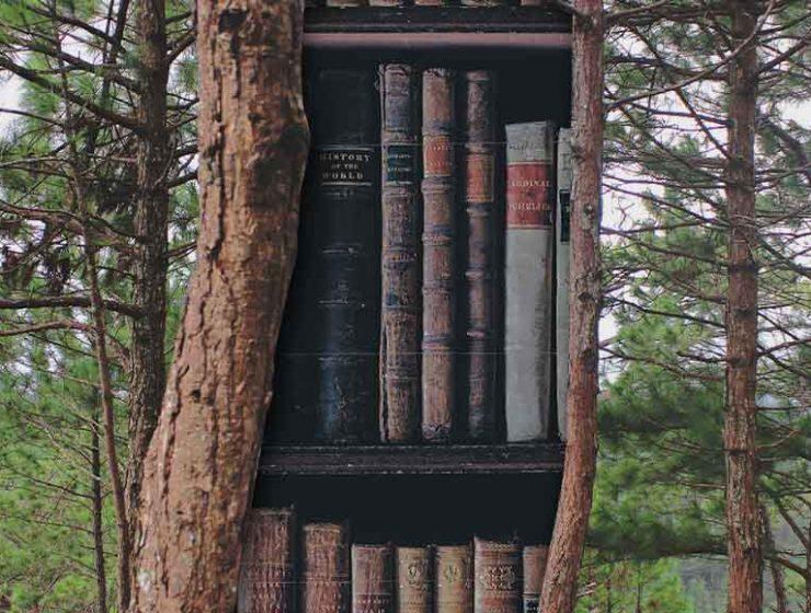 Tronchi d'albero diventano librerie a cielo aperto