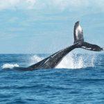 Giornata mondiale degli oceani, il problema è la nostra mentalità usa e getta