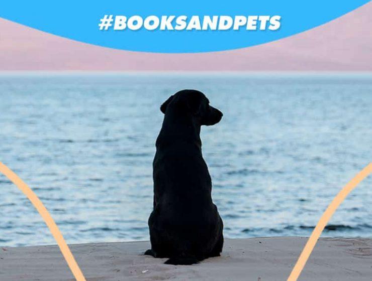 booksandpets luna cane canile