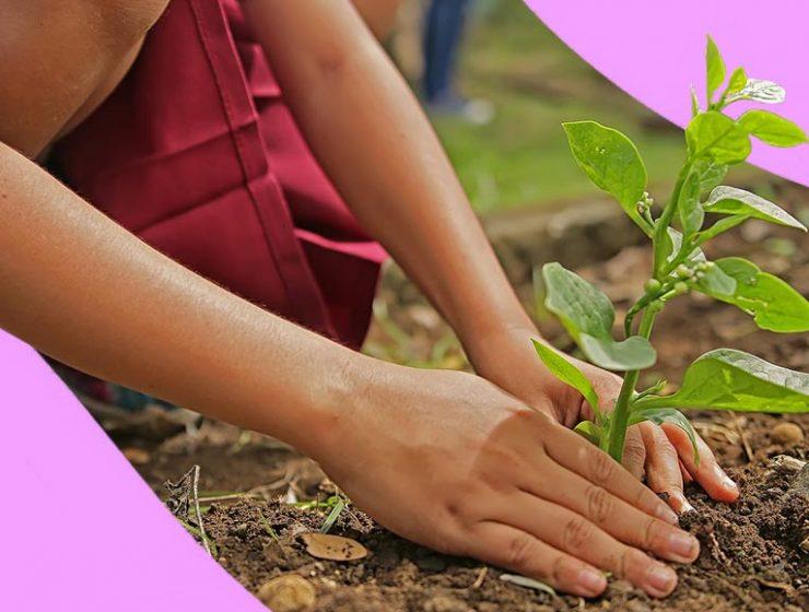 A Firenze puoi piantare un albero in nome di chi ami
