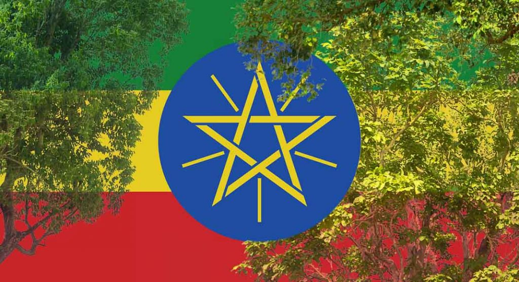 Etiopia, in 12 ore piantati oltre 350 milioni di alberi per combattere il cambiamento climatico