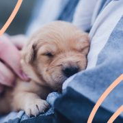Giornata mondiale del cane, 5 motivi per cui un cane ti migliora la vita