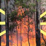 Incendi in Amazzonia, Siberia, Canarie e Indonesia. Perché è importante difendere le foreste