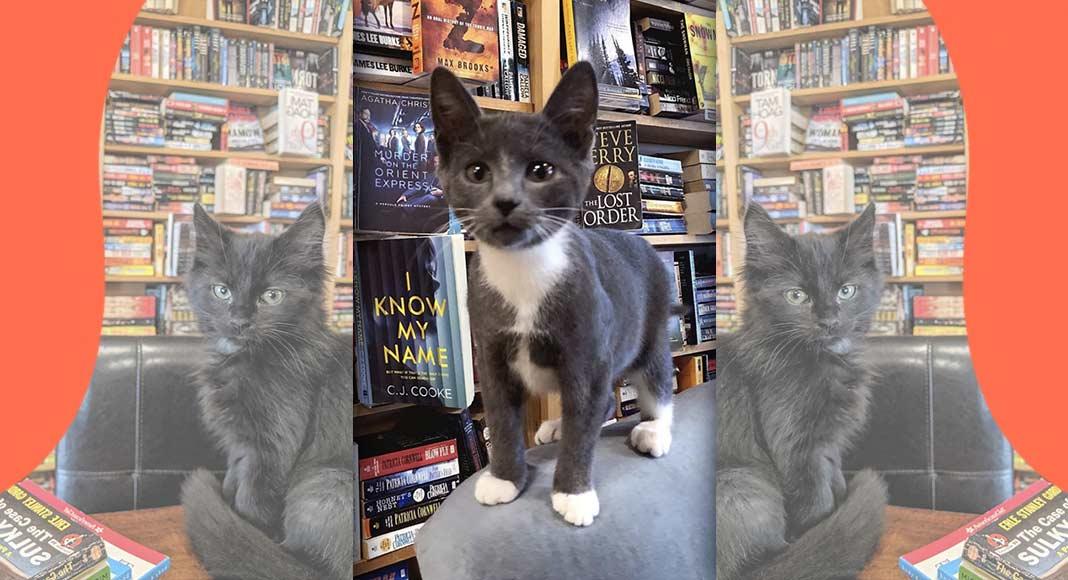 Otis & Clementine's, la libreria dove è possibile adottare i gattini abbandonati