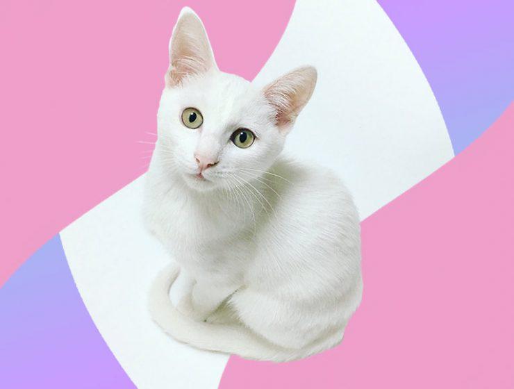 Festa Nazionale del Gatto, le 10 poesie più belle dedicate ai mici