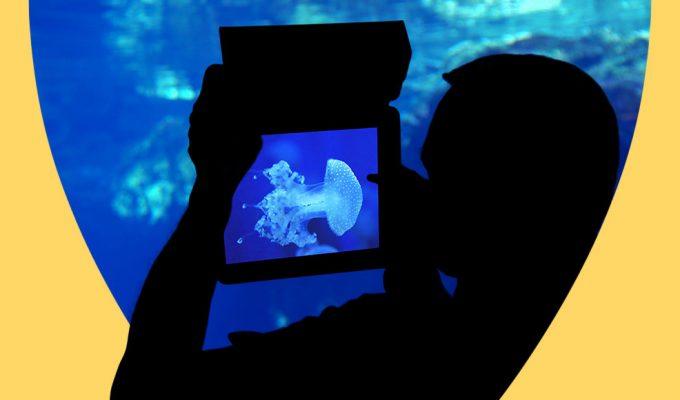 visita-virtuale-acquario-genova (1)