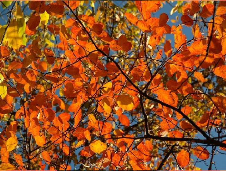 """""""Soldati"""" di Ungaretti, la precarietà delle foglie in autunno come metafora di vita"""