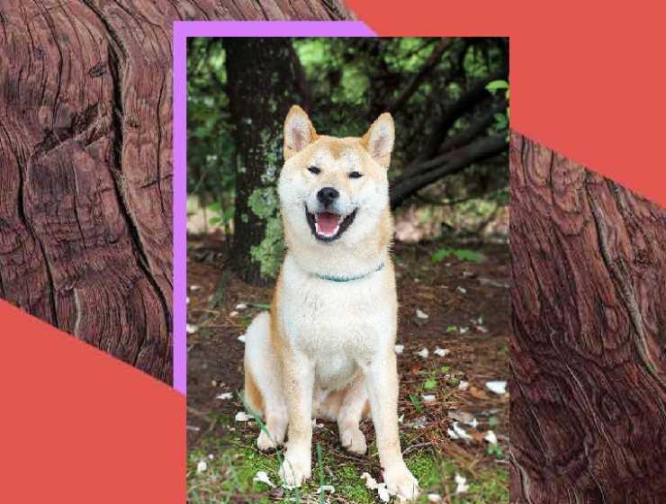 Hachiko: lo straordinario cane che ci ha lasciato in eredità un'importante messaggio