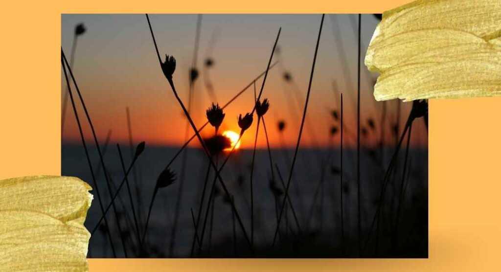 Portami il tramonto in una tazza, la poesia d'amore di Emily Dickinson