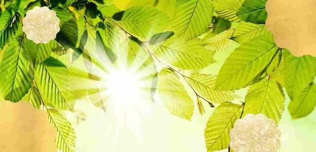 Giornata Mondiale dell'Ambiente, perché si celebra il 5 giugno