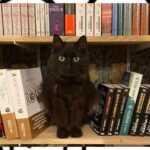 mon-chat-pitre-libreria-con-gatti-1201-568